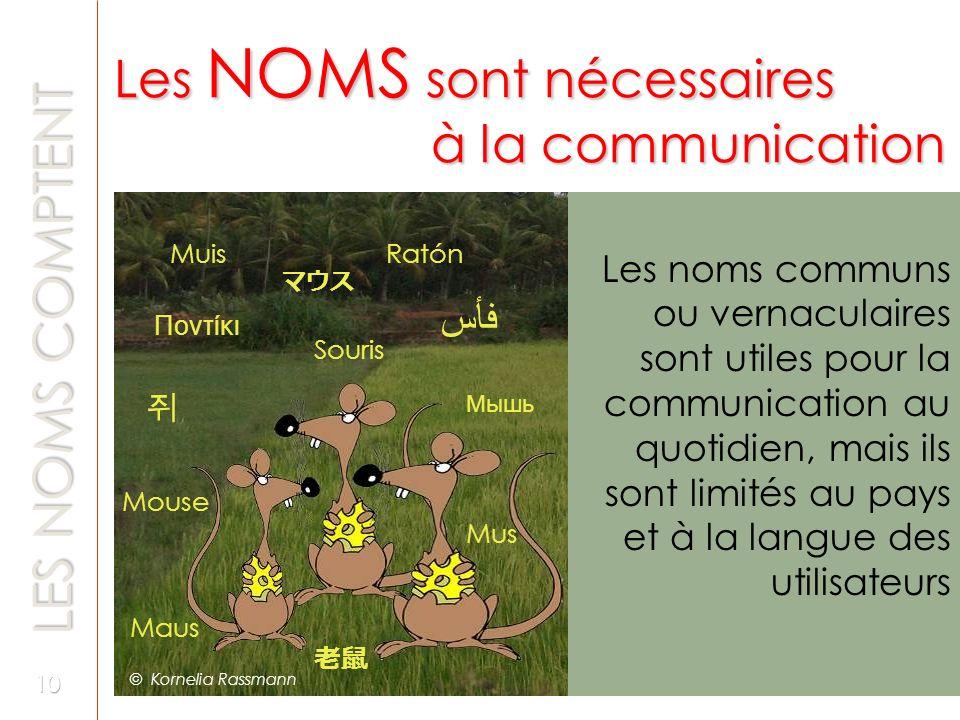 Les noms communs ou vernaculaires sont utiles pour la communication au quotidien, mais ils sont limités au pays et à la langue des utilisateurs فأس Ma