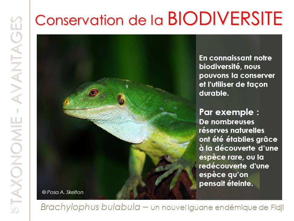 Brachylophus bulabula – un nouvel iguane endémique de Fidji En connaissant notre biodiversité, nous pouvons la conserver et l'utiliser de façon durabl