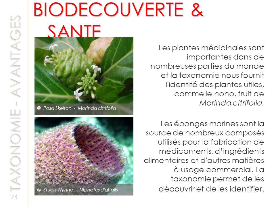 TAXONOMIE - AVANTAGES © Stuart Wynne - Niphates digitalis © Posa Skelton - Morinda citrifolia Les plantes médicinales sont importantes dans de nombreu