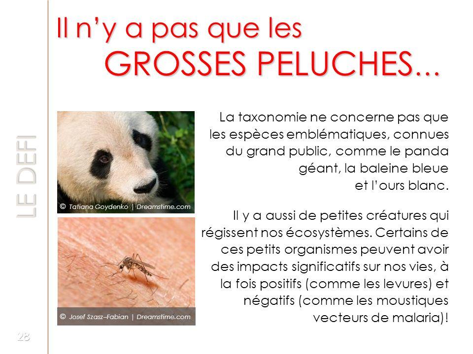 Il ny a pas que les GROSSES PELUCHES … LE DEFI La taxonomie ne concerne pas que les espèces emblématiques, connues du grand public, comme le panda géa