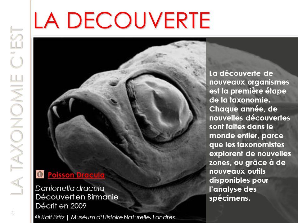 TAXONOMIE - AVANTAGES TAXONOMIE - AVANTAGES La taxonomie nous permet de comprendre notre biodiversité.