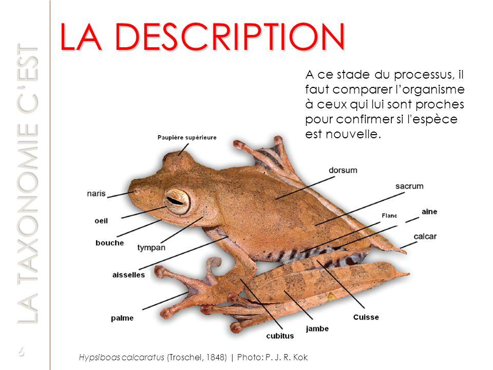 Règne - Animalia Phylum - Chordata Classe - Mammalia Sous-classe - Eutheria Ordre - Artiodactyla Famille - Bovidae Sous-famille - Caprinae Genre - Ovis Espèce - Ovis aries Mon nom est Dolly .