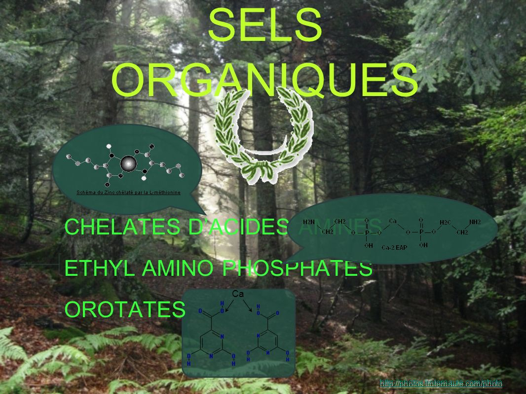 SELS ORGANIQUES CHELATES DACIDES AMINES ETHYL AMINO PHOSPHATES OROTATES Ca http://photos.linternaute.com/photo