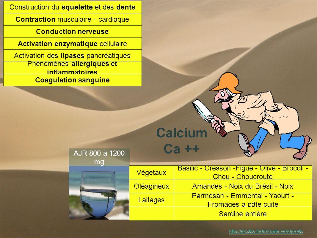 Magnésium Mg++ Composant actif de + de 300 enzymes rôle Energétique rôle Transmission: neuromédiateurs Composant du suc pancréatique Régulateur Calcique antispasmodique antistress stimule le système immunitaire Céréales blé - sarrasin - avoine - maïs - riz complet - pain complet Végétaux soja - haricot blanc - lentilles - épinard - figues - datte Oléagineux noix de cajou - amandes - pistache - noix - noisette - diversBigorneau - poisson - crevette AJR 350 mg http://photos.linternaute.com/photo