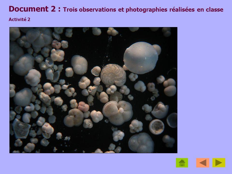 Document 2 : Trois observations et photographies réalisées en classe Activité 2