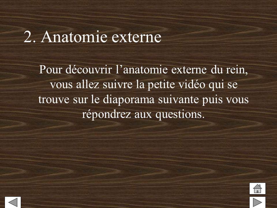 2. Anatomie externe Pour découvrir lanatomie externe du rein, vous allez suivre la petite vidéo qui se trouve sur le diaporama suivante puis vous répo