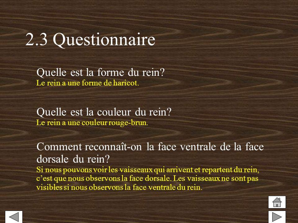 2.3 Questionnaire Quelle est la forme du rein? Le rein a une forme de haricot. Quelle est la couleur du rein? Le rein a une couleur rouge-brun. Commen
