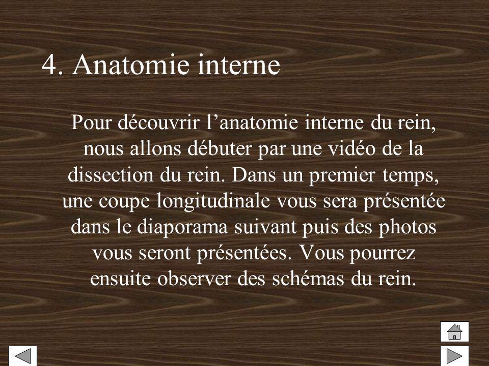 4. Anatomie interne Pour découvrir lanatomie interne du rein, nous allons débuter par une vidéo de la dissection du rein. Dans un premier temps, une c