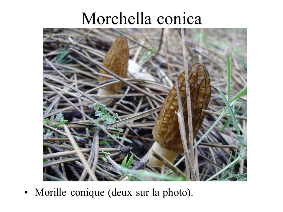 42 champignons comestibles Pointer sur « diaporama-visionner le diaporama ». Mettre le son (en sourdine) et laisser défiler.