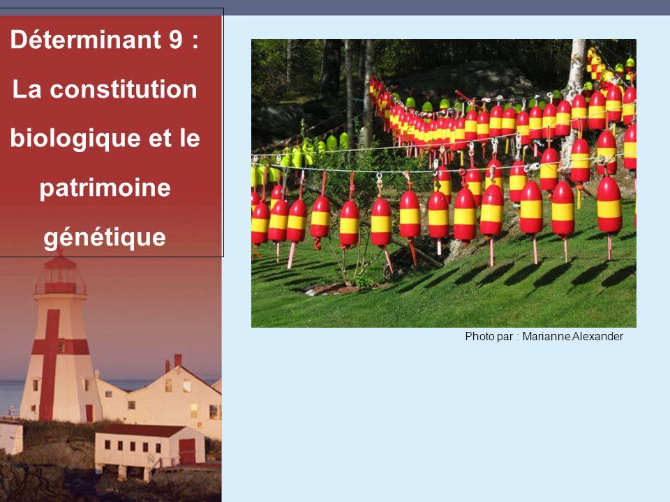Déterminant 9 : La constitution biologique et le patrimoine génétique Photo par : Marianne Alexander