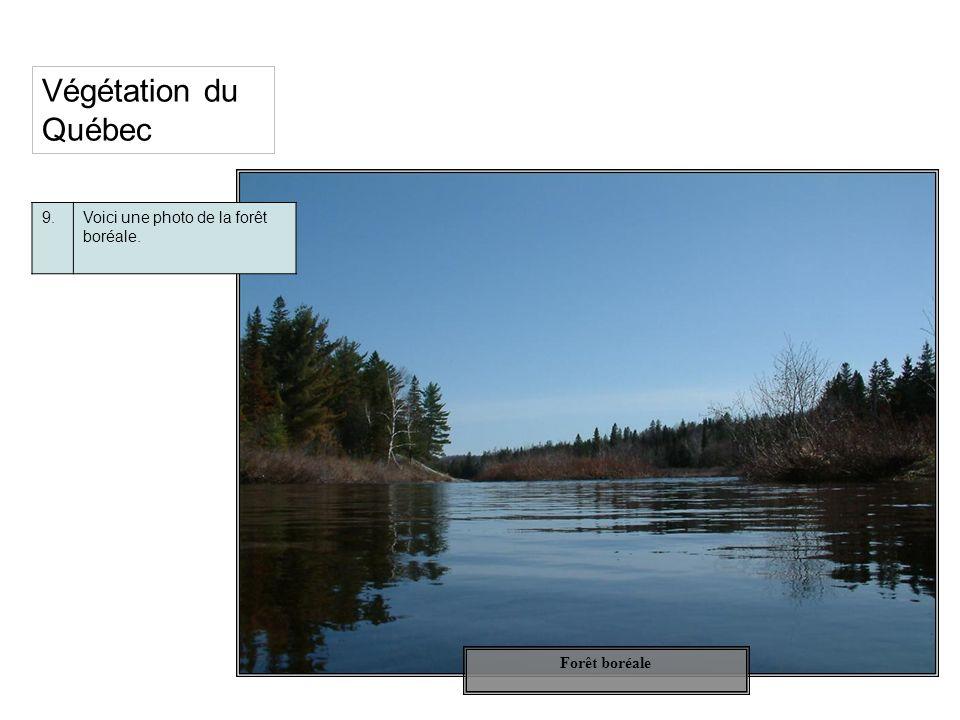 Forêt boréale Végétation du Québec 9.Voici une photo de la forêt boréale.