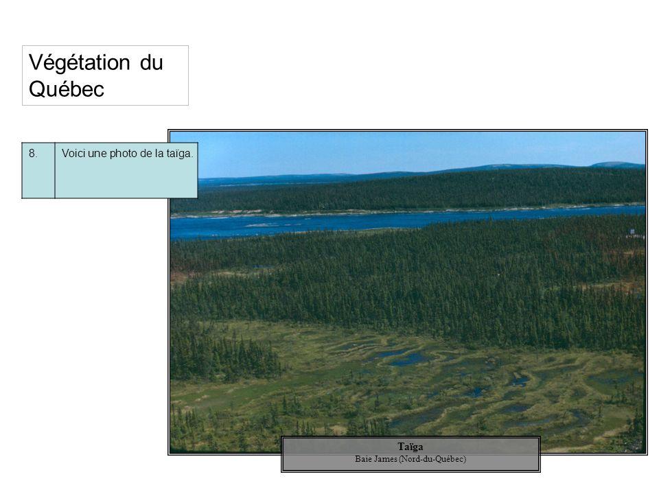 Taïga Baie James (Nord-du-Québec) Végétation du Québec 8.Voici une photo de la taïga.