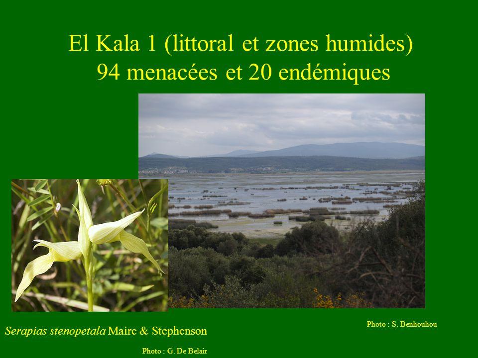 El Kala 1 (littoral et zones humides) 94 menacées et 20 endémiques Serapias stenopetala Maire & Stephenson Photo : G. De Belair Photo : S. Benhouhou