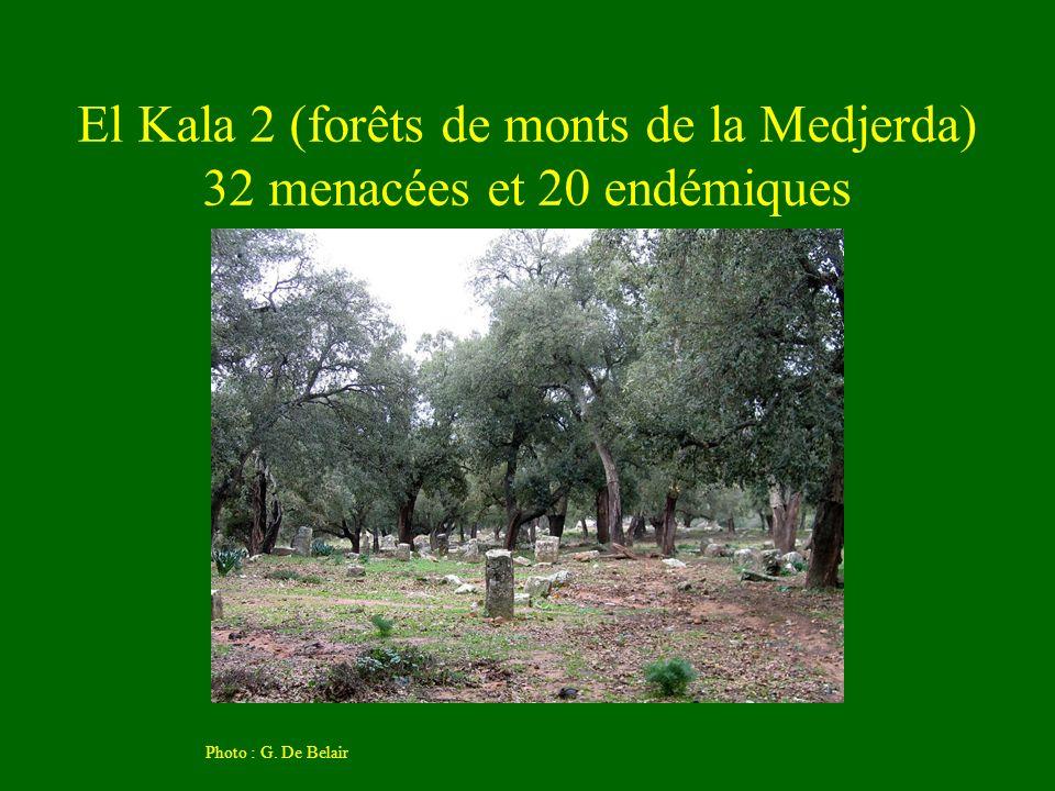 El Kala 2 (forêts de monts de la Medjerda) 32 menacées et 20 endémiques Photo : G. De Belair