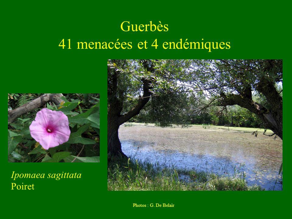 Guerbès 41 menacées et 4 endémiques Ipomaea sagittata Poiret Photos : G. De Belair