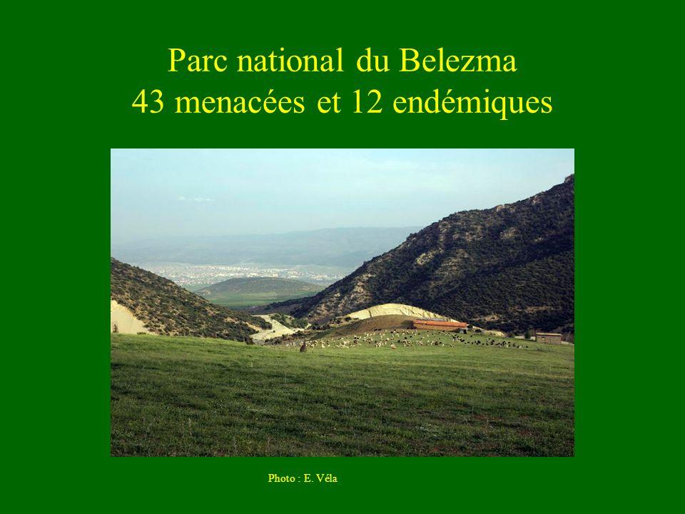 Parc national du Belezma 43 menacées et 12 endémiques Photo : E. Véla