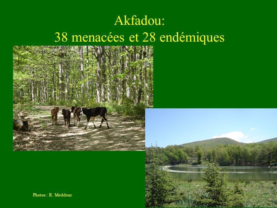 Akfadou: 38 menacées et 28 endémiques Photos : R. Meddour