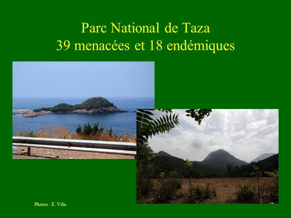 Parc National de Taza 39 menacées et 18 endémiques Photos : E. Véla