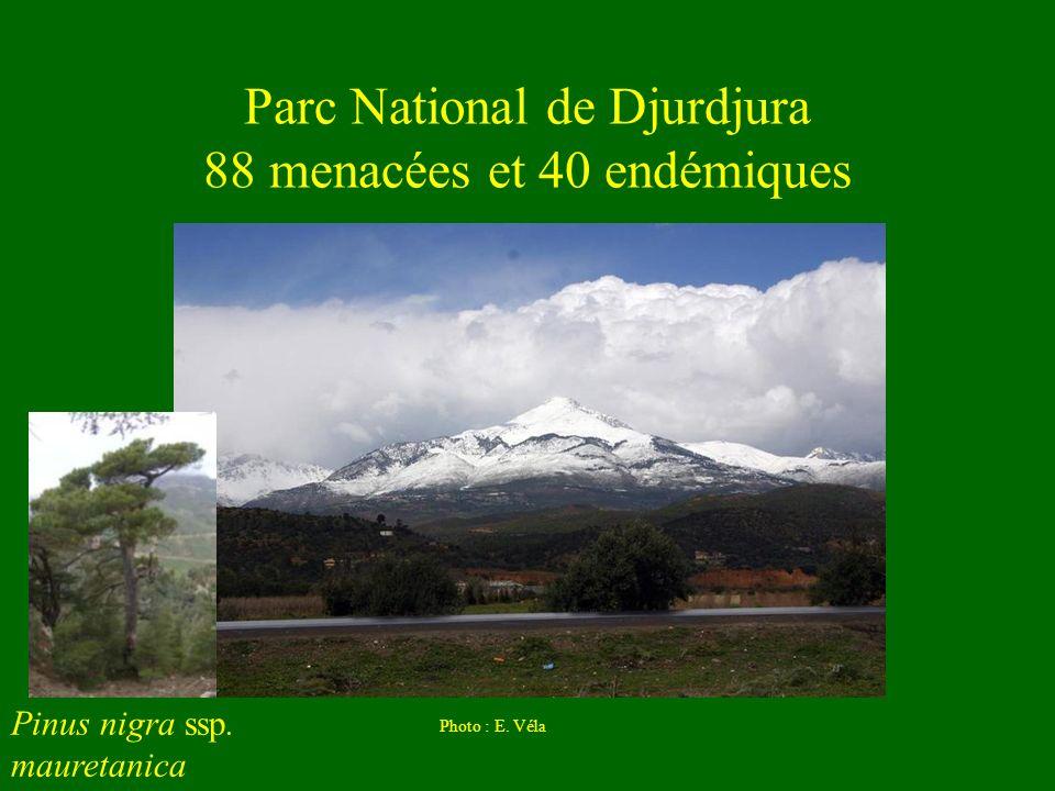 Parc National de Djurdjura 88 menacées et 40 endémiques Photo : E. Véla Pinus nigra ssp. mauretanica