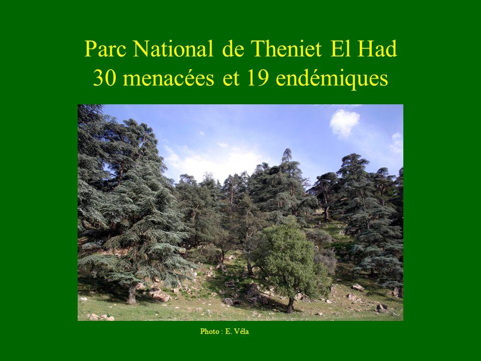 Parc National de Theniet El Had 30 menacées et 19 endémiques Photo : E. Véla