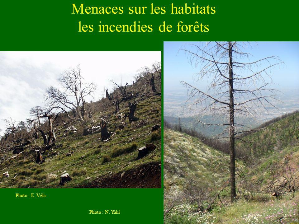 Menaces sur les habitats les incendies de forêts Photo : E. Véla Photo : N. Yahi