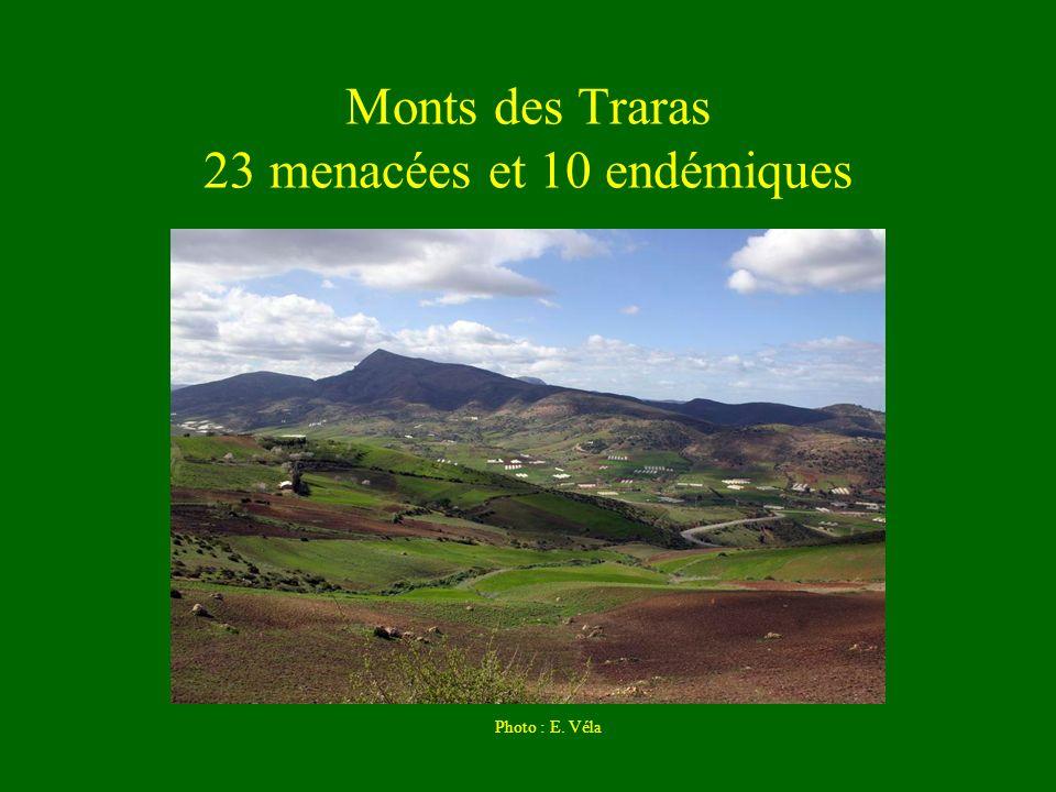 Monts des Traras 23 menacées et 10 endémiques Photo : E. Véla