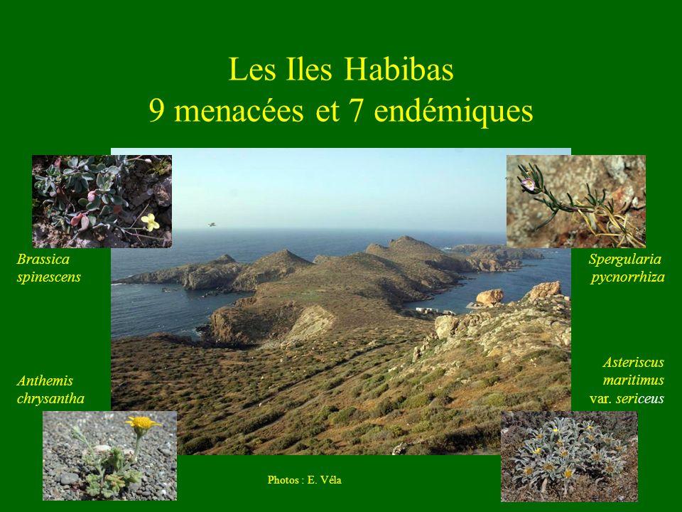 Les Iles Habibas 9 menacées et 7 endémiques Photos : E. Véla Brassica spinescens Anthemis chrysantha Spergularia pycnorrhiza Asteriscus maritimus var.