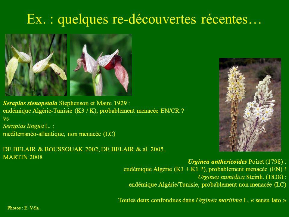 Ex. : quelques re-découvertes récentes… Photos : E. Véla Serapias stenopetala Stephenson et Maire 1929 : endémique Algérie-Tunisie (K3 / K), probablem