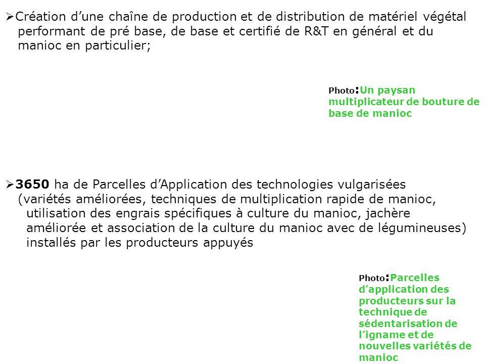 Création dune chaîne de production et de distribution de matériel végétal performant de pré base, de base et certifié de R&T en général et du manioc e