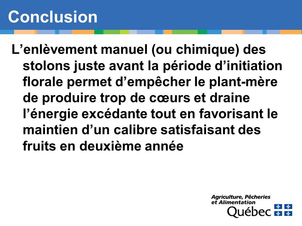 Lenlèvement manuel (ou chimique) des stolons juste avant la période dinitiation florale permet dempêcher le plant-mère de produire trop de cœurs et dr
