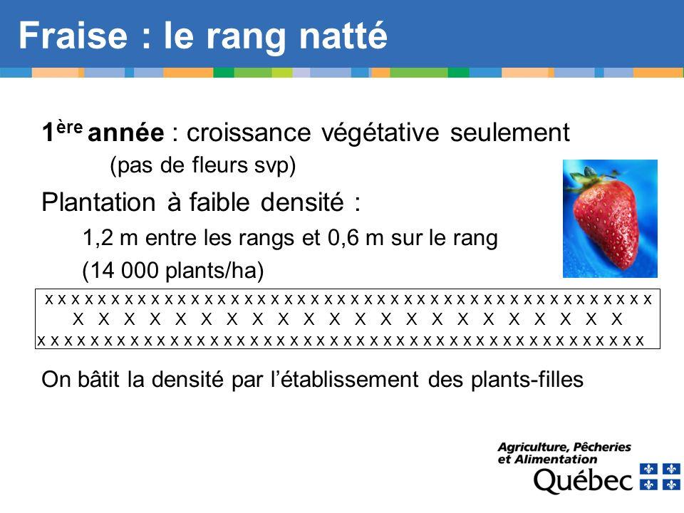Fraise : le rang natté 1 ère année : croissance végétative seulement (pas de fleurs svp) Plantation à faible densité : 1,2 m entre les rangs et 0,6 m