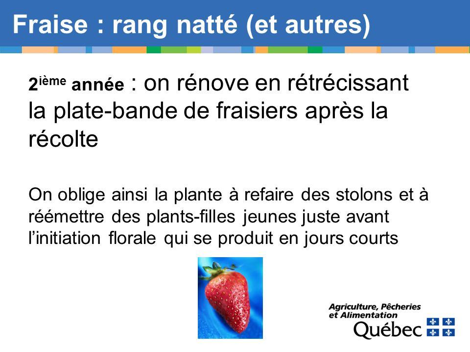 Fraise : rang natté (et autres) 2 ième année : on rénove en rétrécissant la plate-bande de fraisiers après la récolte On oblige ainsi la plante à refa