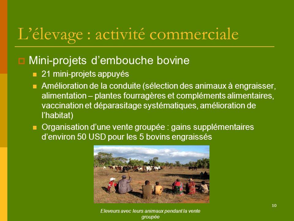 10 Lélevage : activité commerciale Mini-projets dembouche bovine 21 mini-projets appuyés Amélioration de la conduite (sélection des animaux à engraiss