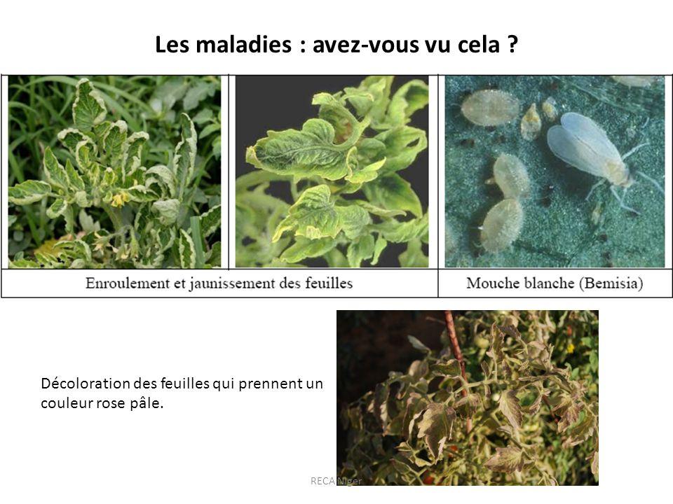 Les maladies : avez-vous vu cela ? Décoloration des feuilles qui prennent un couleur rose pâle. RECA Niger