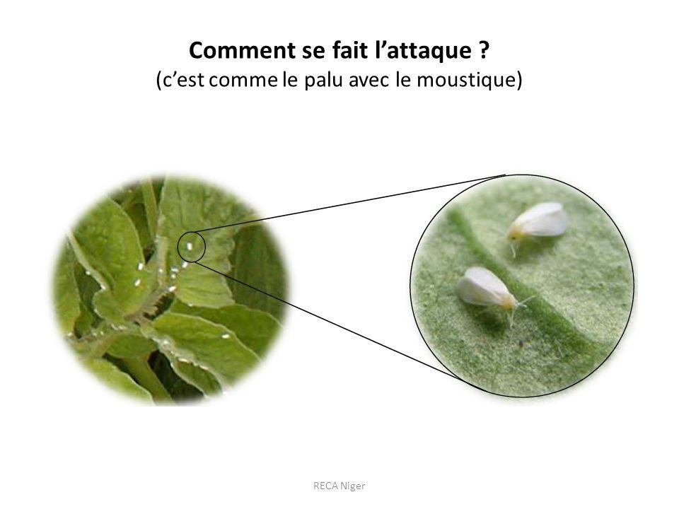 Comment se fait lattaque ? (cest comme le palu avec le moustique) RECA Niger
