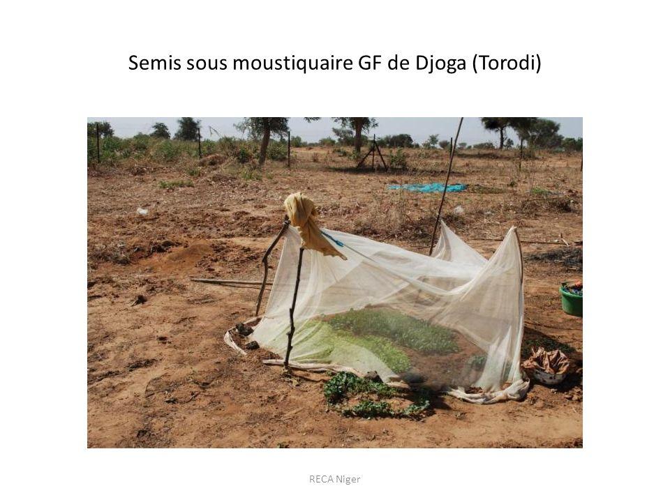 Semis sous moustiquaire GF de Djoga (Torodi) RECA Niger