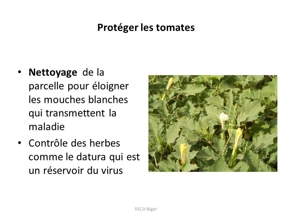 Protéger les tomates Nettoyage de la parcelle pour éloigner les mouches blanches qui transmettent la maladie Contrôle des herbes comme le datura qui est un réservoir du virus RECA Niger