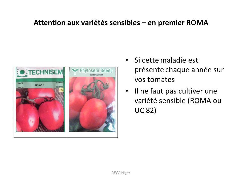 Attention aux variétés sensibles – en premier ROMA Si cette maladie est présente chaque année sur vos tomates Il ne faut pas cultiver une variété sensible (ROMA ou UC 82) RECA Niger