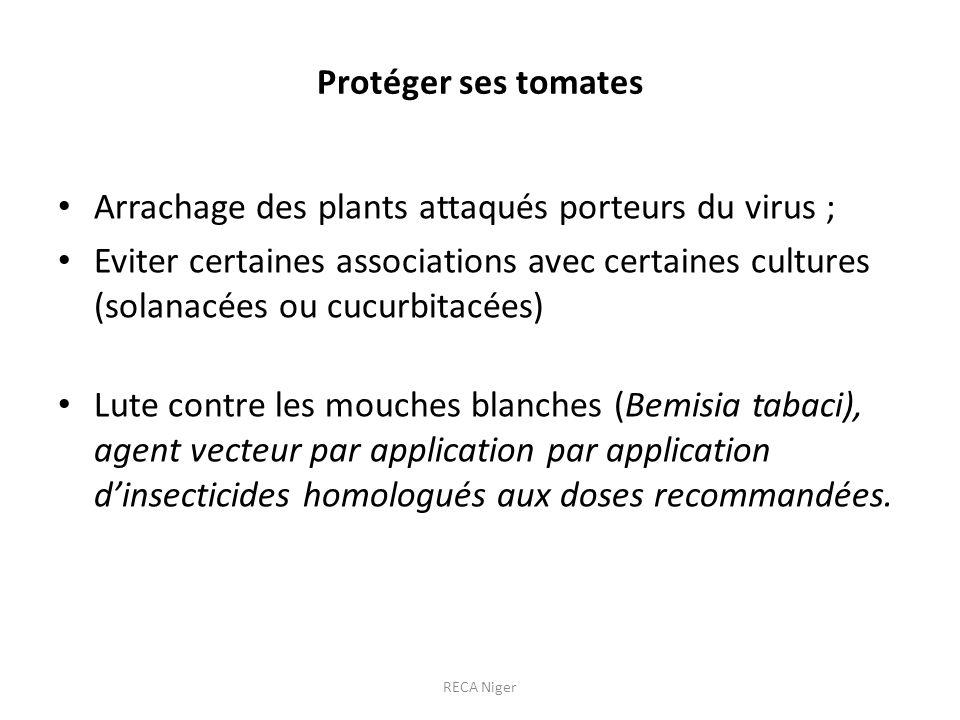 Protéger ses tomates Arrachage des plants attaqués porteurs du virus ; Eviter certaines associations avec certaines cultures (solanacées ou cucurbitac