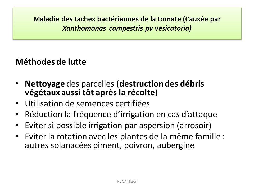 Maladie des taches bactériennes de la tomate (Causée par Xanthomonas campestris pv vesicatoria) Méthodes de lutte Nettoyage des parcelles (destruction