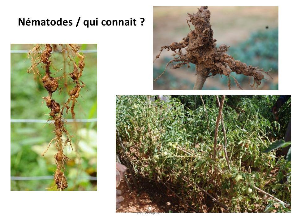 Nématodes / qui connait ? RECA Niger