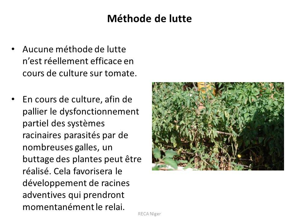 Méthode de lutte Aucune méthode de lutte nest réellement efficace en cours de culture sur tomate.