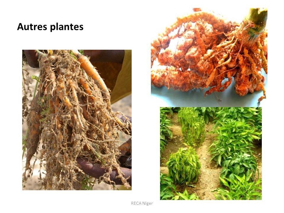 Autres plantes RECA Niger