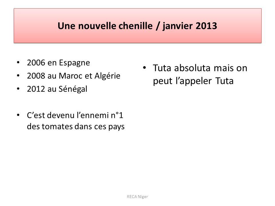 Une nouvelle chenille / janvier 2013 2006 en Espagne 2008 au Maroc et Algérie 2012 au Sénégal Cest devenu lennemi n°1 des tomates dans ces pays Tuta absoluta mais on peut lappeler Tuta RECA Niger