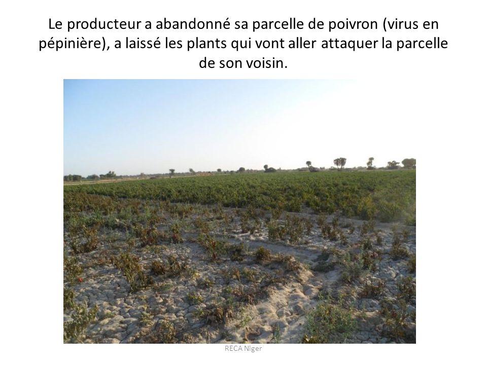 Le producteur a abandonné sa parcelle de poivron (virus en pépinière), a laissé les plants qui vont aller attaquer la parcelle de son voisin.