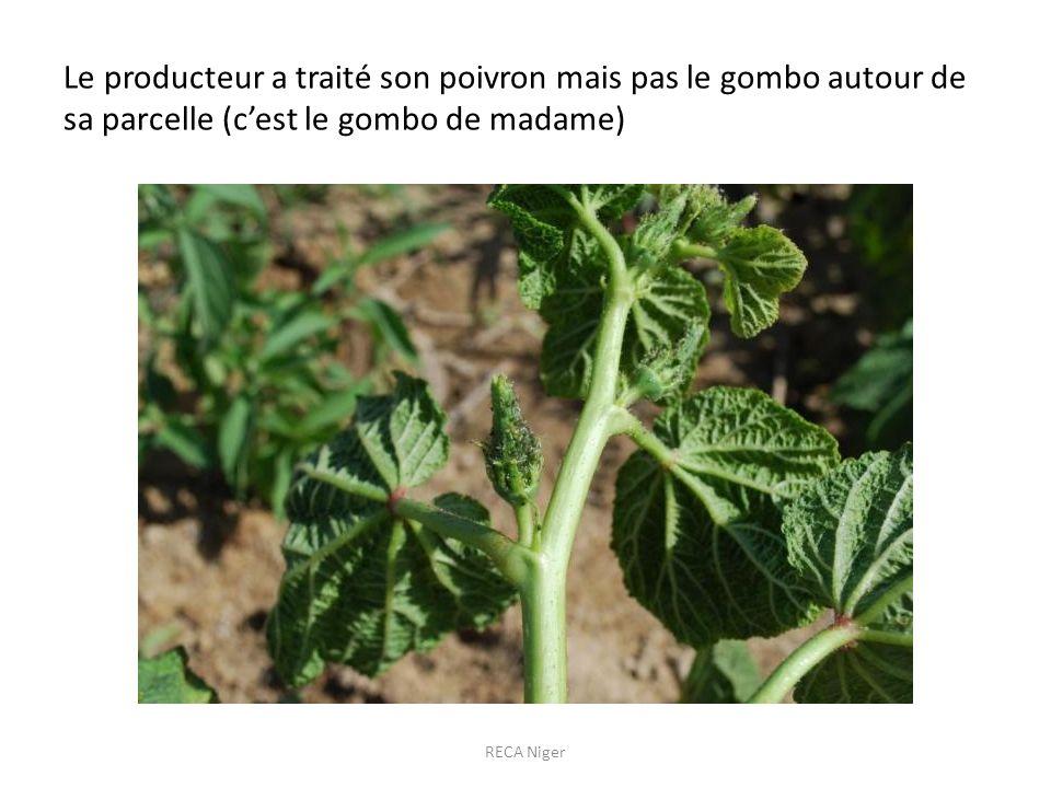 Le producteur a traité son poivron mais pas le gombo autour de sa parcelle (cest le gombo de madame) RECA Niger