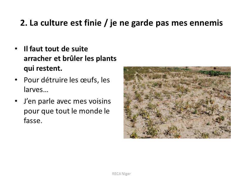 2. La culture est finie / je ne garde pas mes ennemis Il faut tout de suite arracher et brûler les plants qui restent. Pour détruire les œufs, les lar
