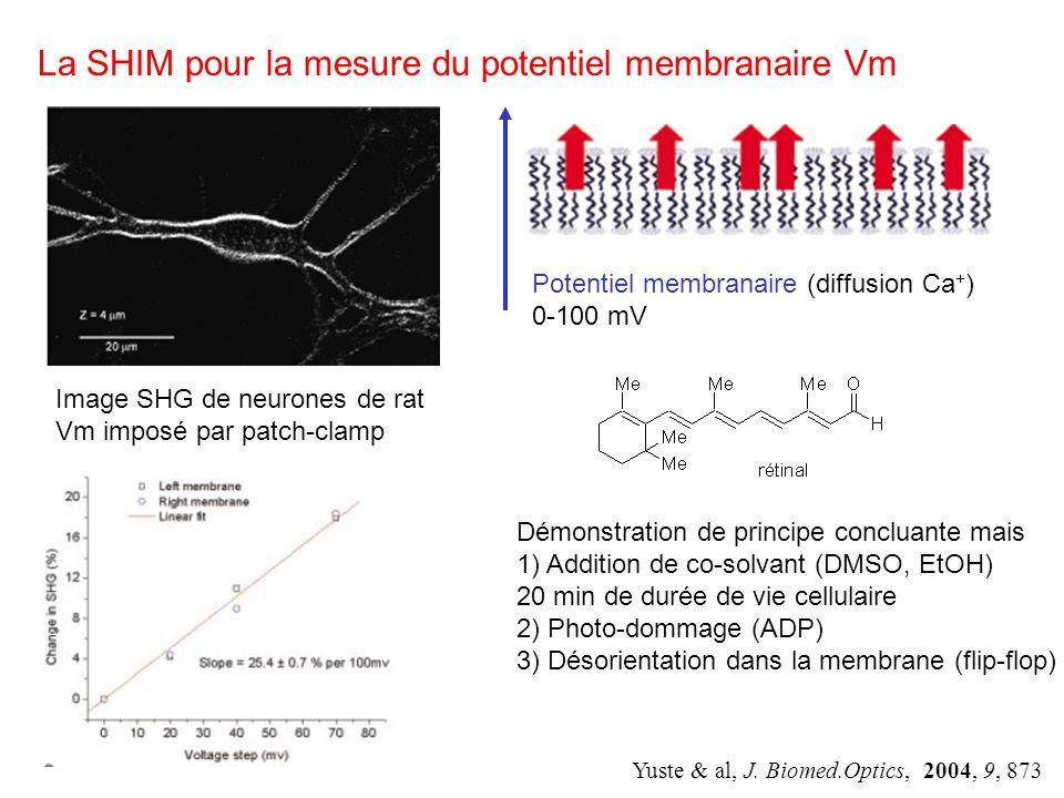 Contrainte de fonctions Non centrosymétrique (SHG) Fluorescente Répondre au Vm (électrochromisme, réorientation) Le cahier des charges de la sonde Contraintes de forme Amphiphile Soluble dans leau Sorienter dans la membrane sans traverser Stable photochimiquement Non toxique Ordre de Grandeur Imager le Vm (SHG 100.10 -30 esu varie de 20%) Résolution spatiale (0,6 m) Résolution temporelle (1 ms) Solubilité (100 nMol) max (laser) = 800 nm donc max (sonde) vers 400nm