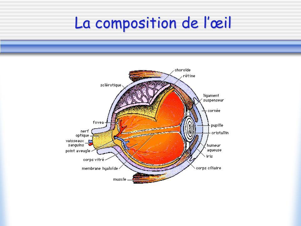 Lœil Lappareil photographique La comparaison « Œil/Appareil photographique » 1.Lappareil photographique comparé à lœil