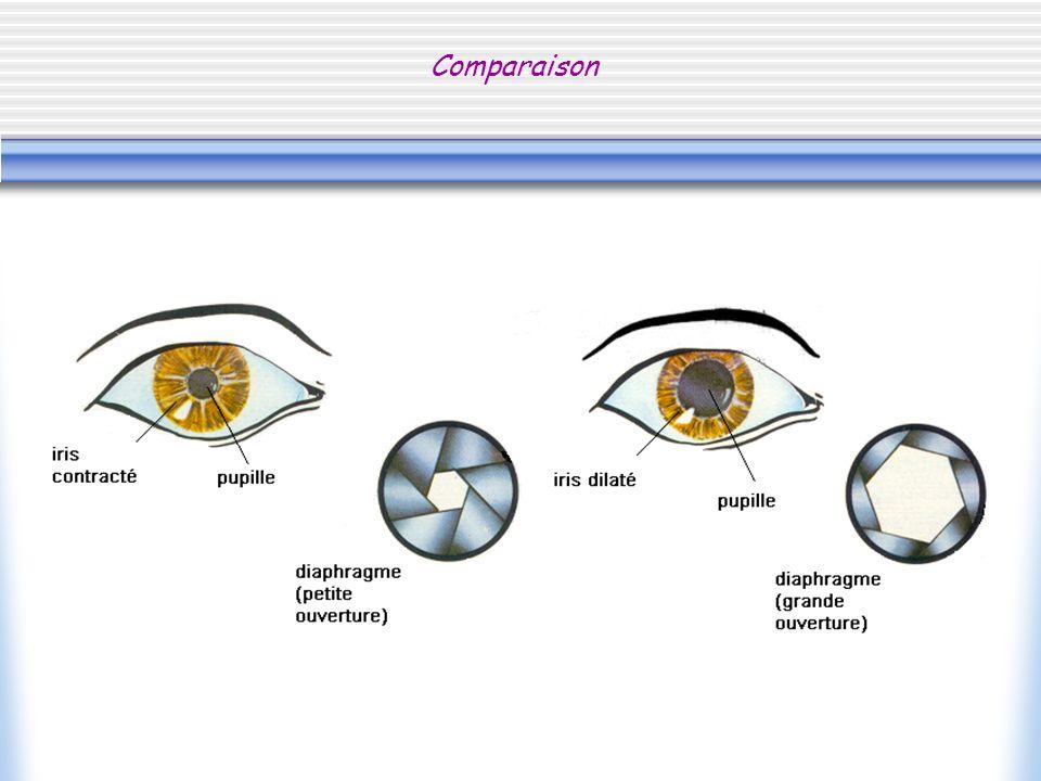 Le cristallin, une lentille biconvexe